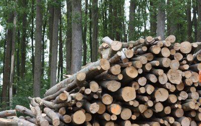 La Biomasa, ¿es realmente neutra?