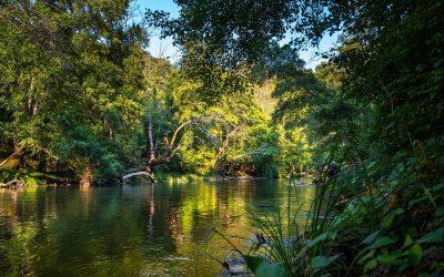 Las selvas absorben menos CO2